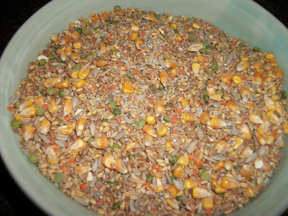 Turkey Tracks:  Chicken Feed Recipe (2/2)