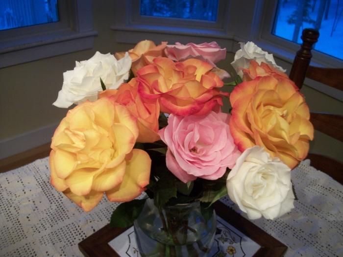 Roses, Feb. 2013