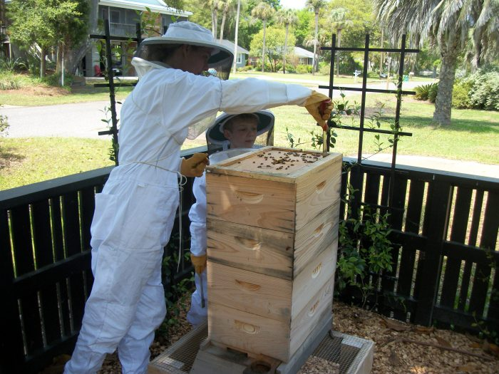 Bees, opening the hive