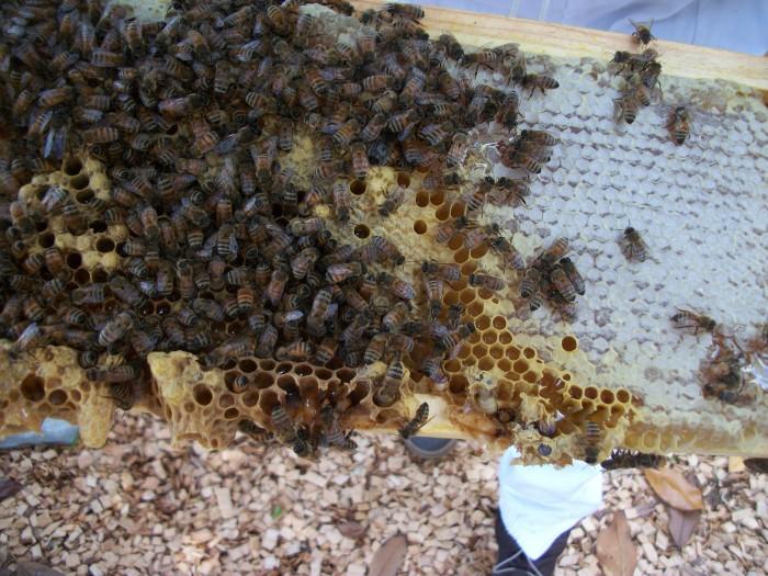 bees up close 2