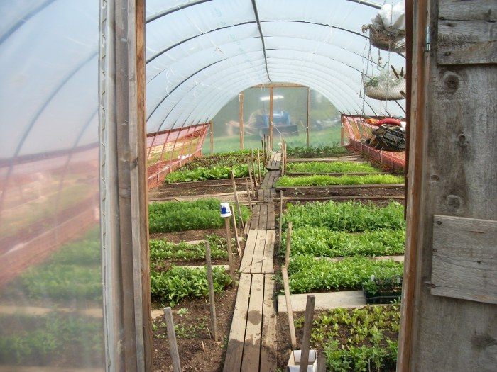 Inside Susan's Hoop House