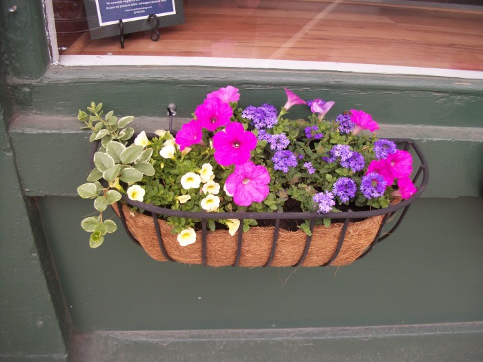 Belfast Window Box 3