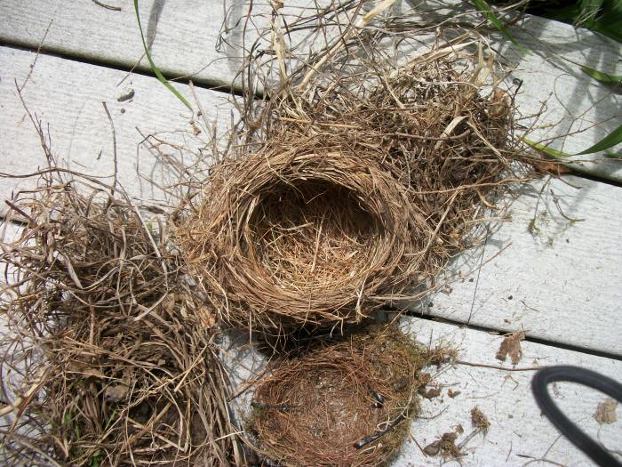 Bird Nest, June 2013