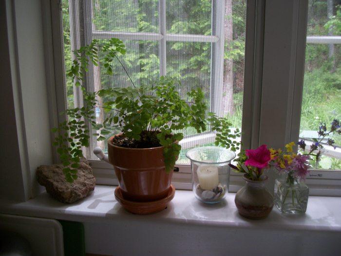 Kitchen Window, June 2013
