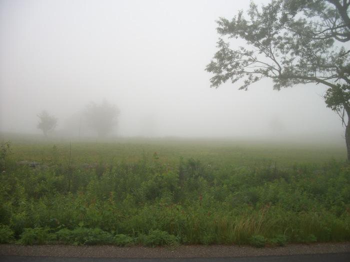 Pea  Soup Fog, June 2013