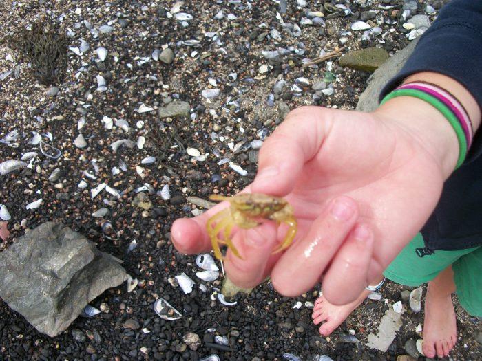 Crab, Rockalnd 5