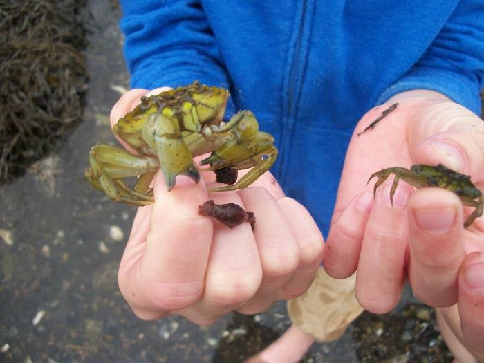 Crabs, Rockalnd 3