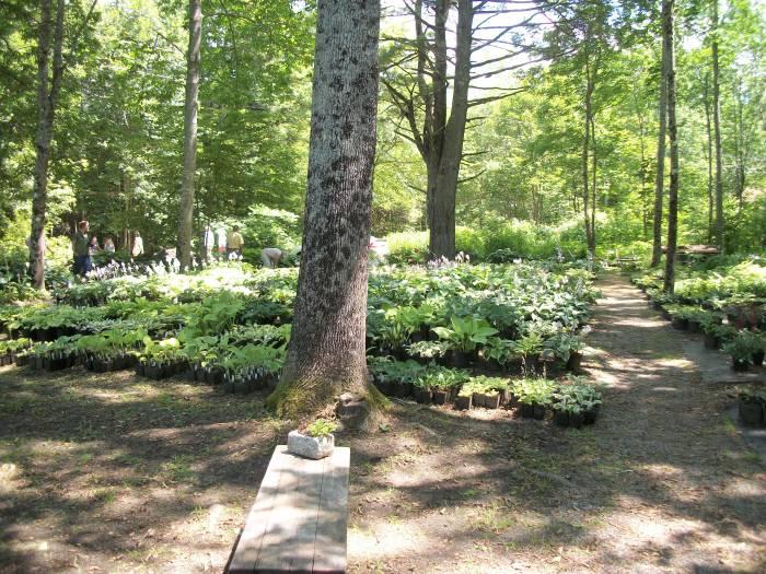 Fernwood Gardens