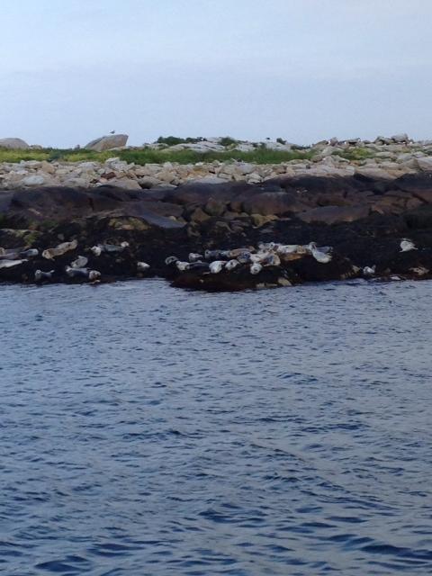 seals, Aug. 2013