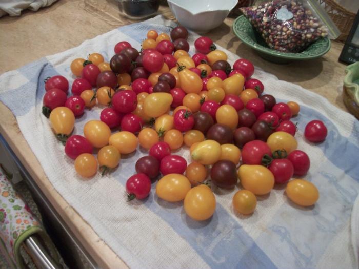 Golden Brook cherries