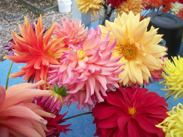 Endless Flowers Farm 7