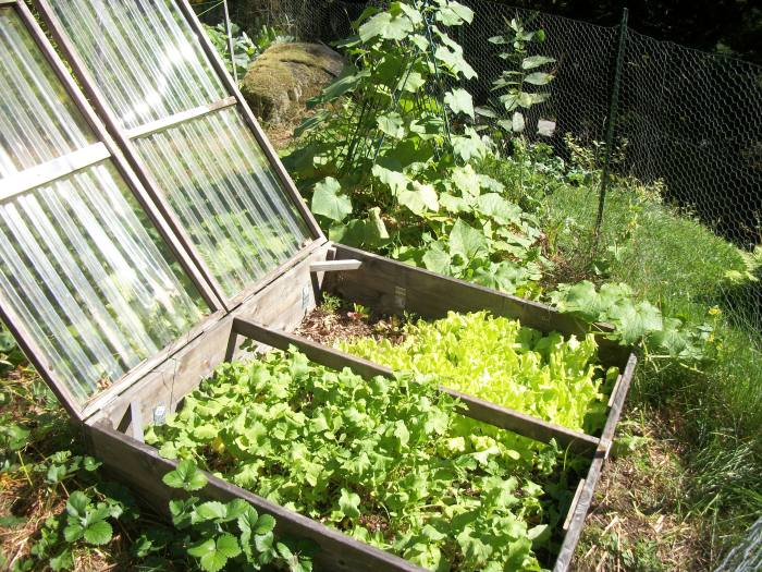 Sept 29, cold frame