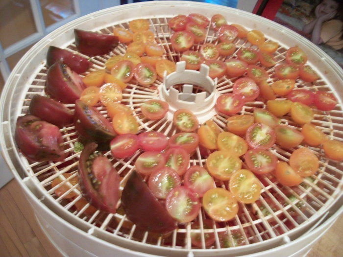 Sept. 29, drying tomatoes