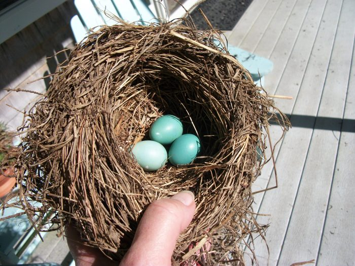 Sept. 29, Robin's Eggs