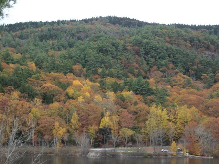 Fall Foliage 7